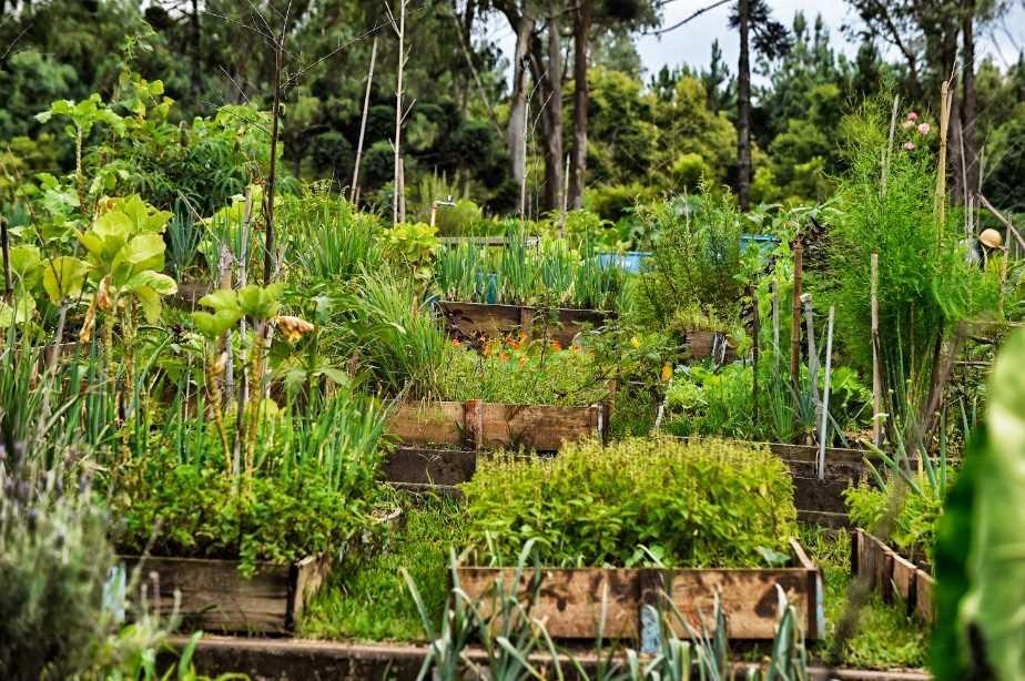 Projeto Vida Rural do Santa Mônica Clube de Campo completa 28 anos