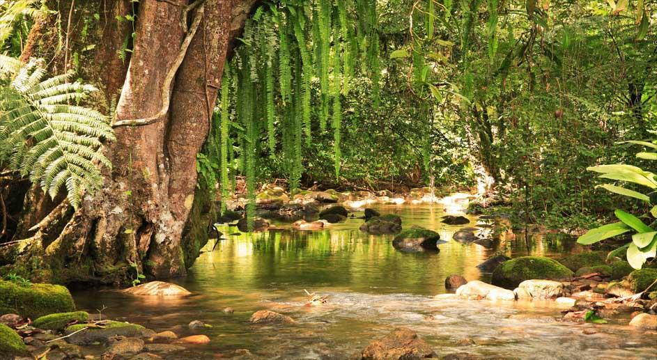 Campanha Um Dia no Parque convoca brasileiros para áreas naturais protegidas em todo País