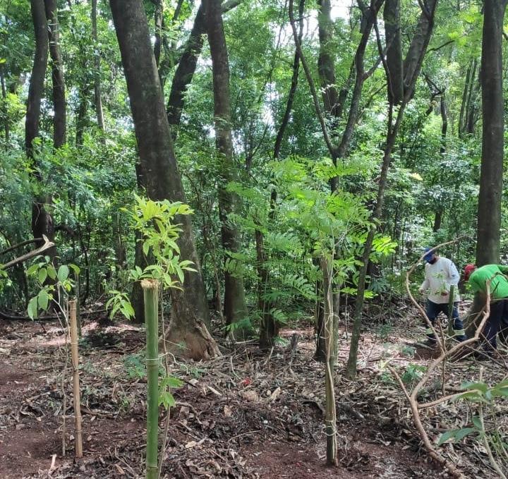 Construtora planta mais de 900 árvores em parques de Maringá