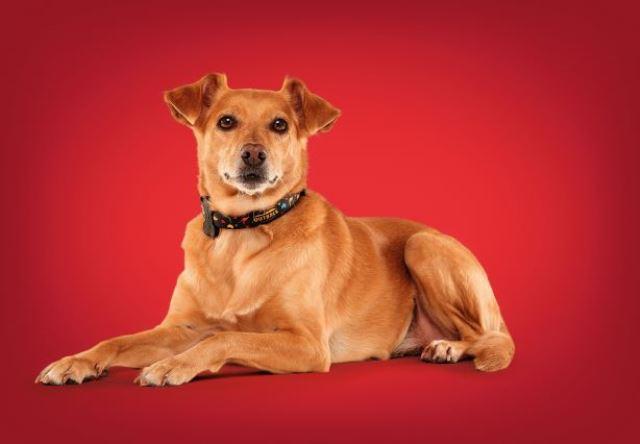 Dia do Amigo: Outback presenteia o 'melhor amigo canino' com coleira exclusiva MeuAuAu em ação especial