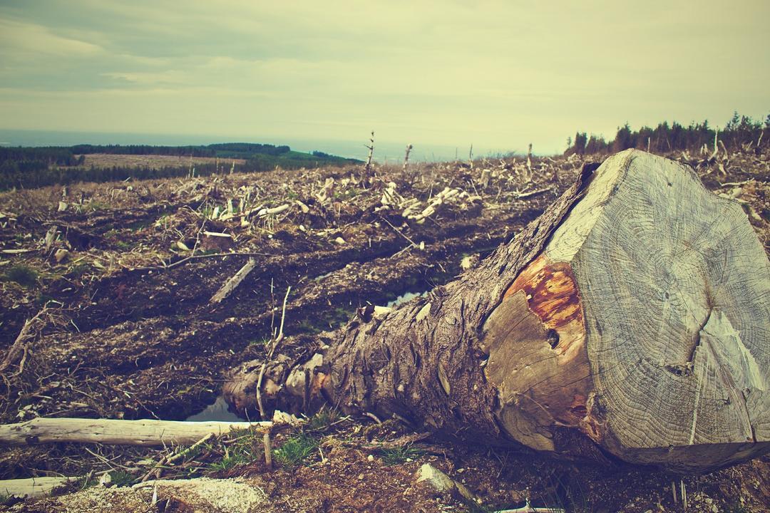 Desmatamento da Amazônia vai causar impactos irreversíveis para a economia