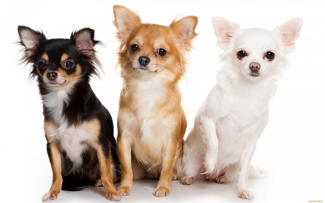 Pet center promove evento para pequenos destemidos