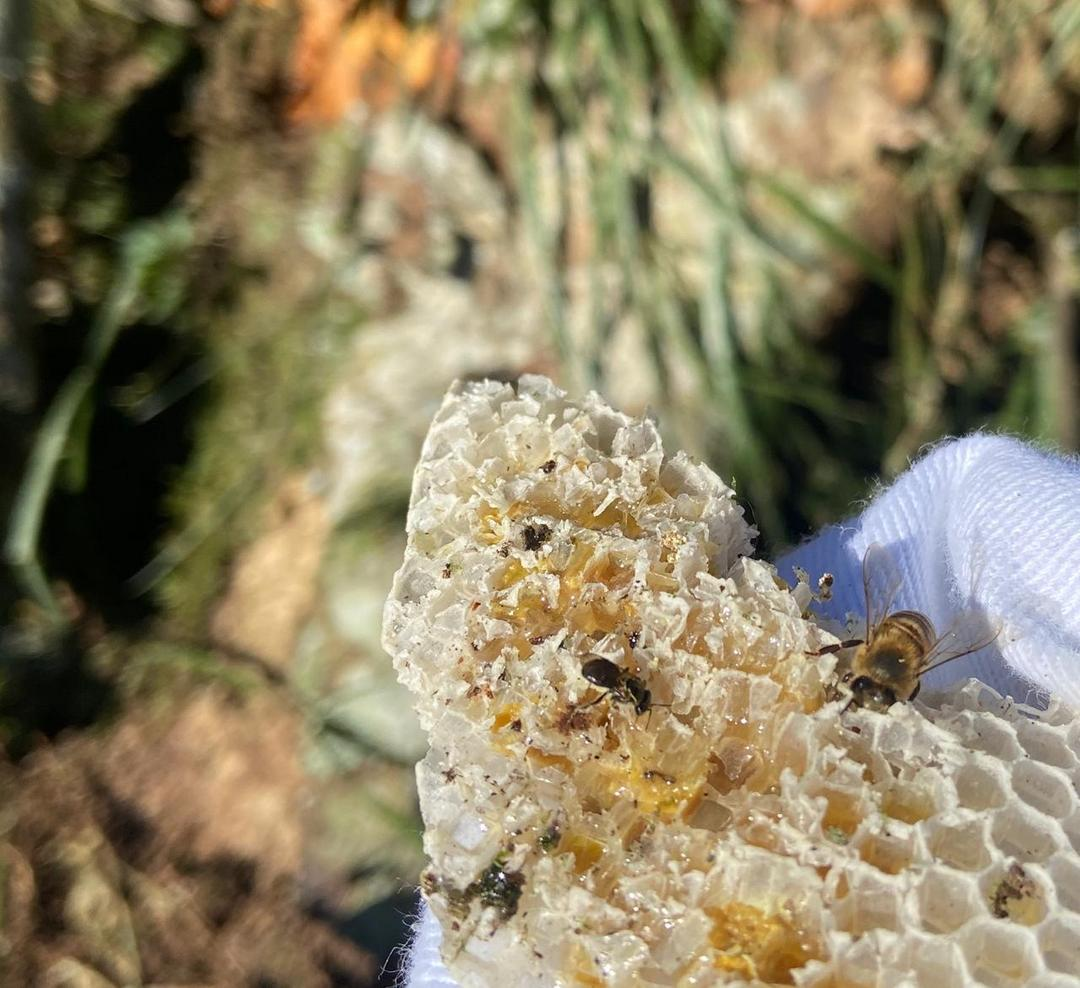 Ação promove o resgate de abelhas no Paraná e estimula o trabalho de pequenos apicultores