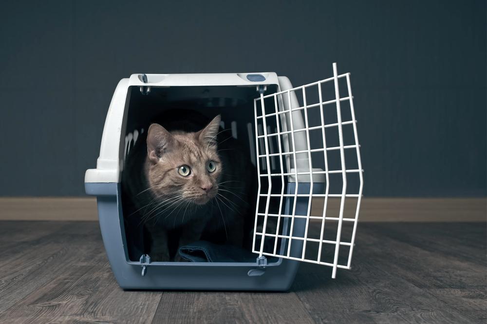 Como viajar com animais de estimação no avião?