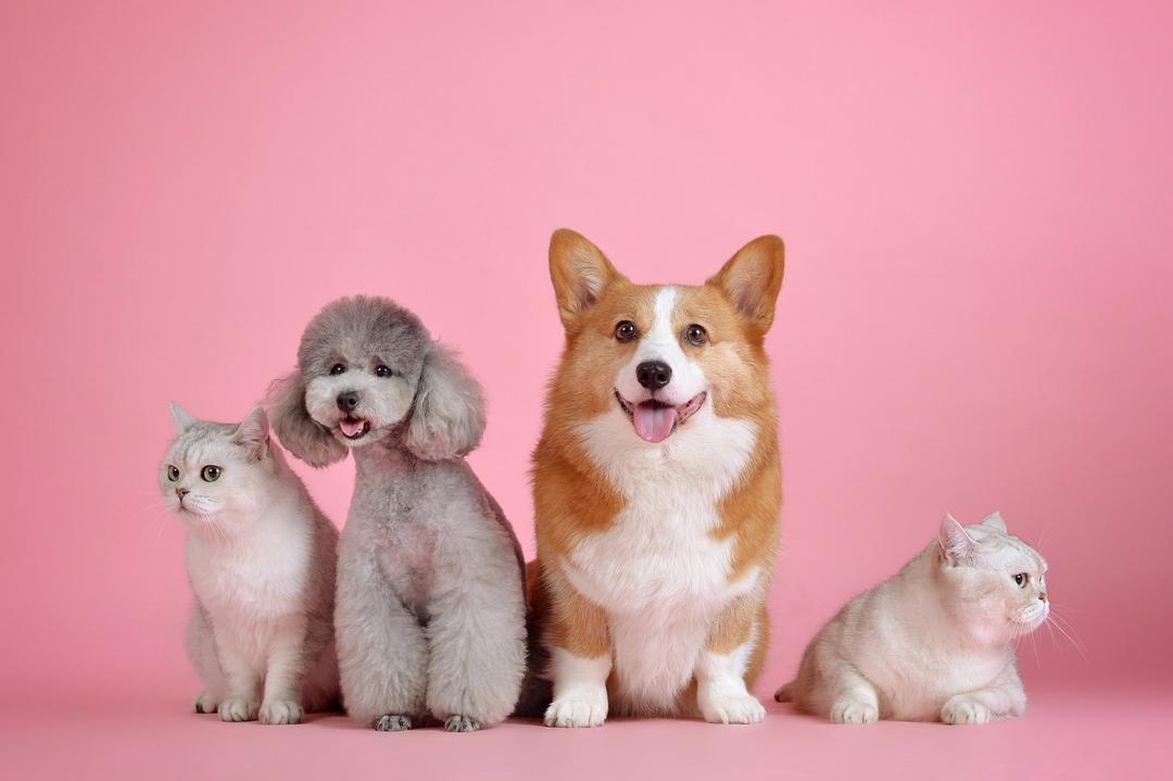 Outubro rosa alerta sobre o câncer de mama em cães e gatos