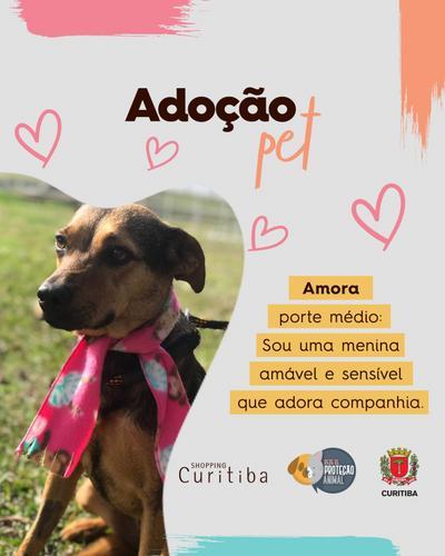 Shopping divulga campanha de adoção de pets, em apoio à Rede de Proteção Animal
