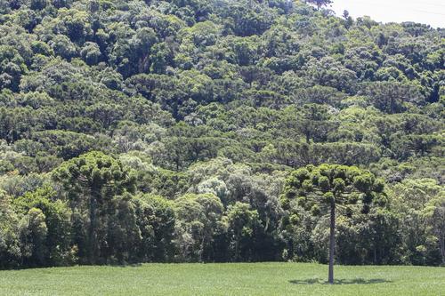Conservação da natureza é recompensada com investimento público