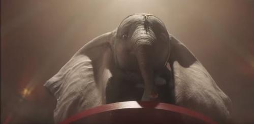 Dumbo abre discussão sobre animais em espetáculos circenses