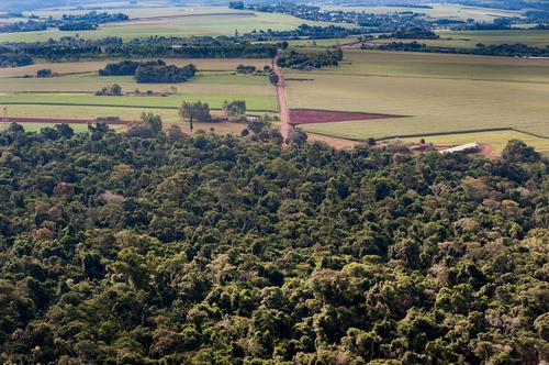 Tentativa de abertura da Estrada do Colono ameaça biodiversidade e mais de 1.600 espécies de animais, destaca