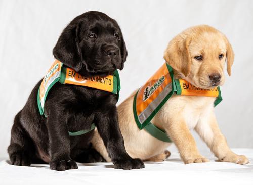 Abasteça e ajude a Escola de Cães-Guias Helen Keller