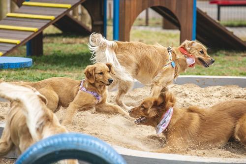 Londrina ganha agenda mensal de eventos para os pets