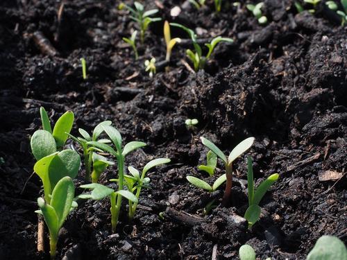 Compensação ambiental além da legislação: os benefícios para as empresas e para o meio ambiente