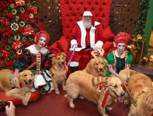 Decoração de Natal do Shopping Curitiba tem lugar especial para os pets