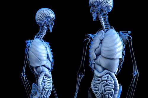 Brasil tem o maior sistema público de transplantes do mundo