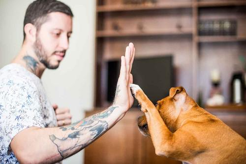 Ansiedade piora na pandemia e prejudica saúde dos pets
