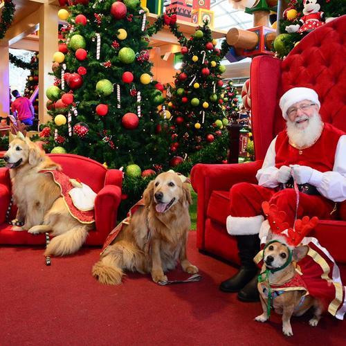Pets também podem aproveitar o Natal no Shopping Estação